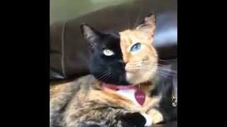 Dünyanın en tuhaf kedisi