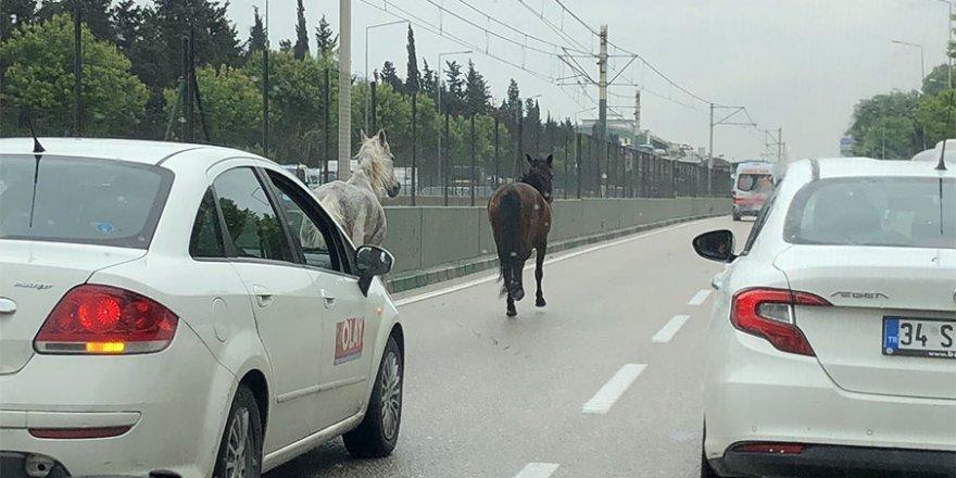 Bursa-Ankara yolunda şaşırtan görüntü