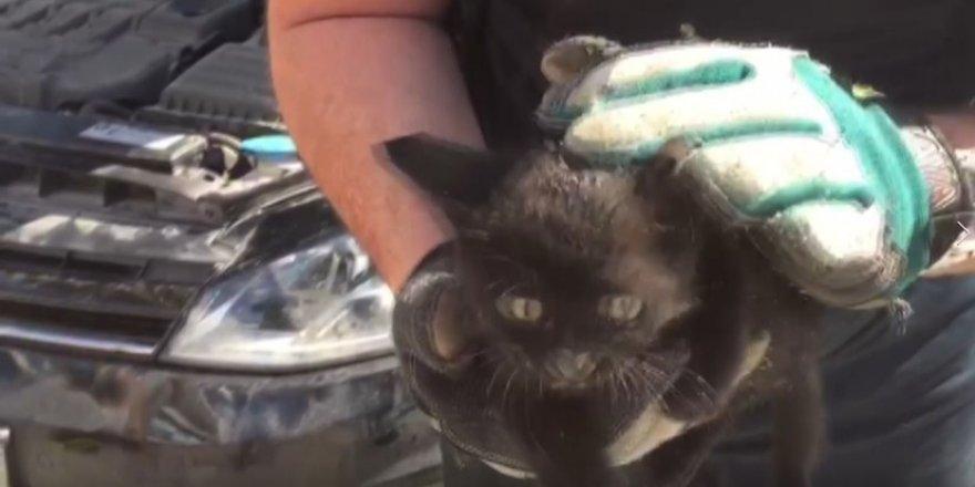 Bursa'da kedi itfaiye ekipleri tarafından böyle kurtarıldı