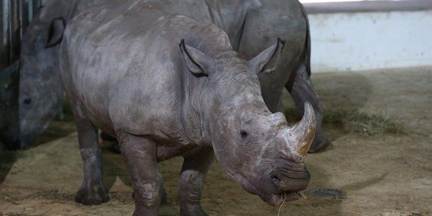 Bursa Hayvanat Bahçesi'nin yeni üyeleri tanıtıldı