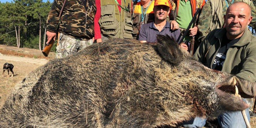Bursa'nın dağ yörelerini domuzlar bastı