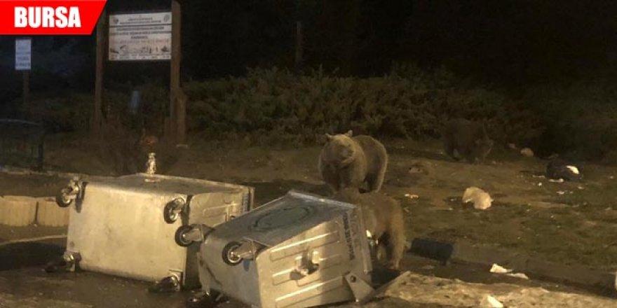 Aç kalan ayıların saldırısına uğradılar