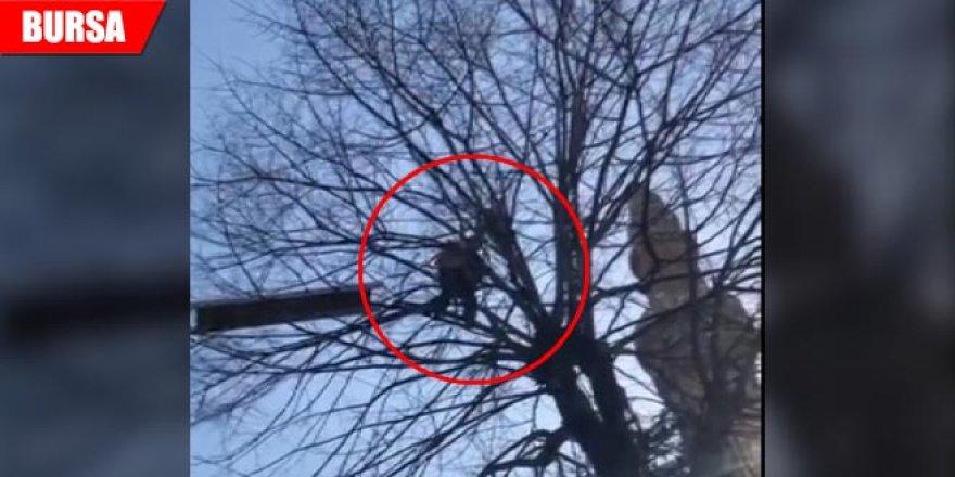 Ağaçta 2 gün mahsur kaldı, dağcı kurtardı