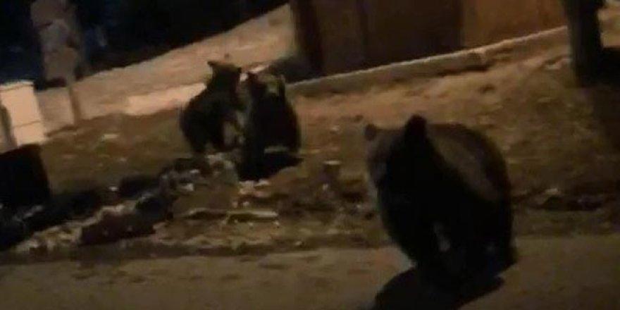 Ayıları rahatsız edince canlarını zor kurtardılar