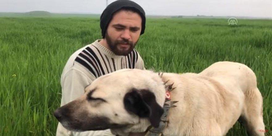 Yangında yavruları ölen köpeğin gözyaşları