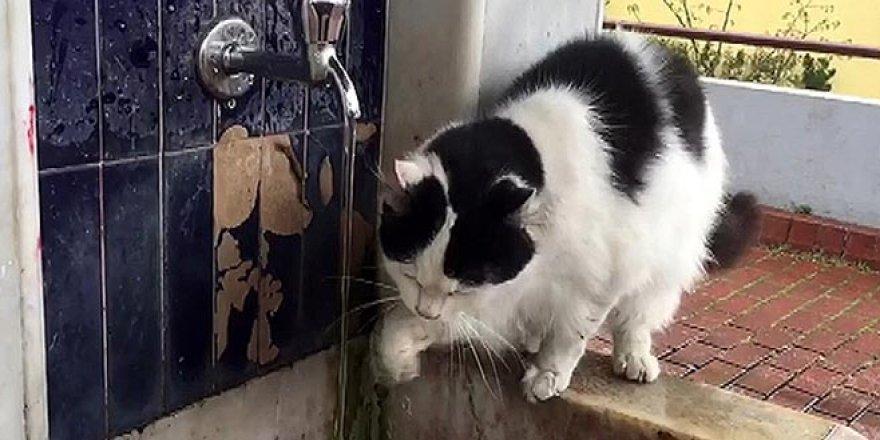 Şadırvanda patisiyle su içen kedi ilgi odağı oldu