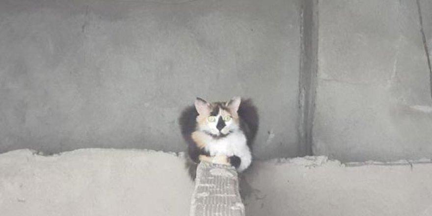 İtfaiye yavru kediyi kurtarmaya çalıştı, anne kedi izledi