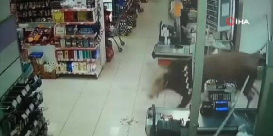 Kaçan kurbanlık dana markete girdi