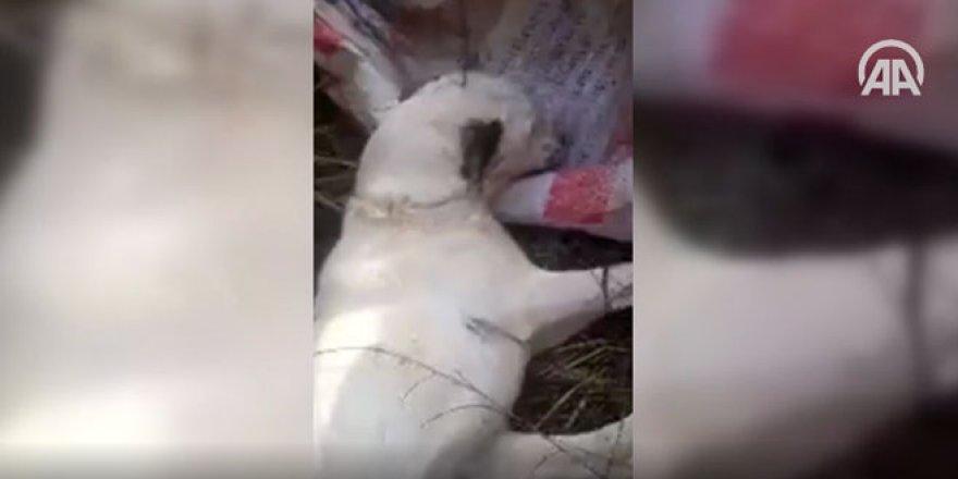 Avcılar buldu! Çuvala koyup ölüme terk etmişler