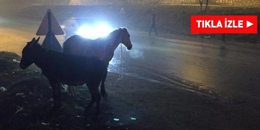Trafiğin en işlek olduğu yerde başı boş atlar tehlike saçıyor!