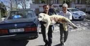 Pazar arabasından yürüteç yapılan 'Kostak'a yardım eli