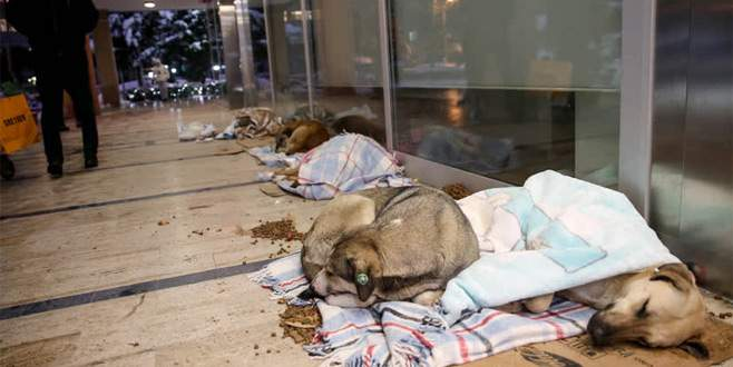 AVM girişi sokak hayvanlarına barınak oldu