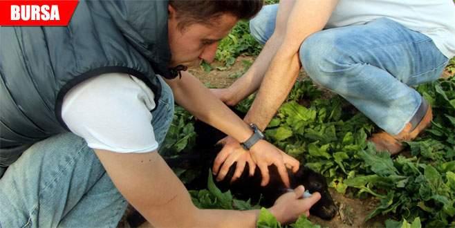 Kullandığı yöntemle kuzuların hayatlarını kurtarıyor