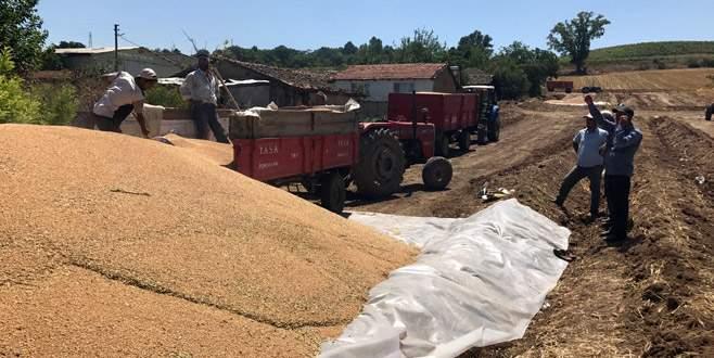 TMO buğday alımlarına başladı