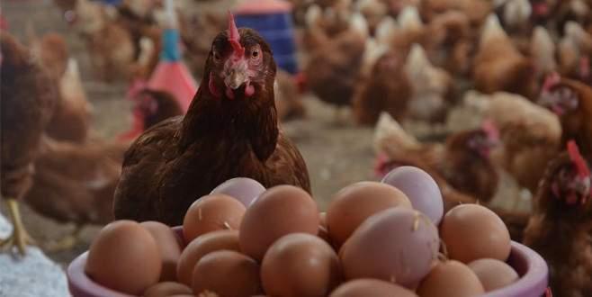 Yumurta üretimi haziranda azaldı