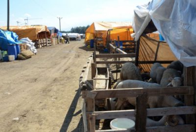 Osmangazi Belediyesi 3 kurban pazarı kurdu