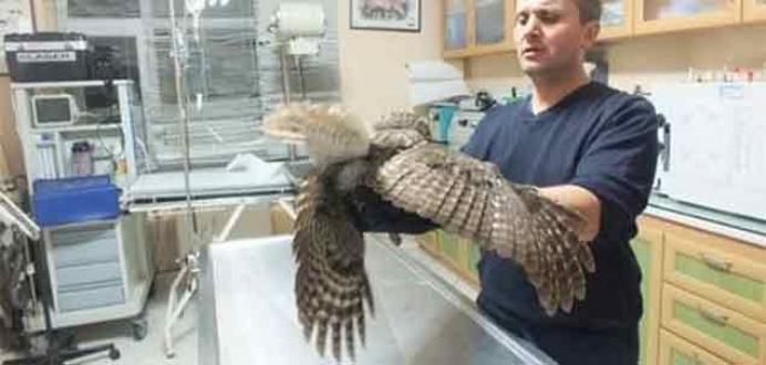 Sağlığına kavuşan baykuş özgürlüğe kanat çırptı
