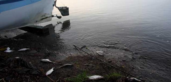 Yüzlerce ölü balık ve kuş kıyıya vurdu