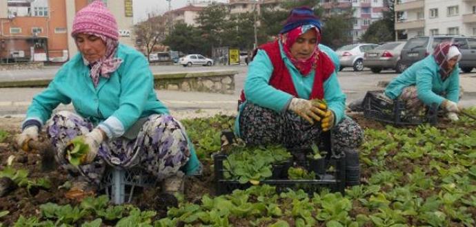Bursa'yı çiçeklendiriyorlar
