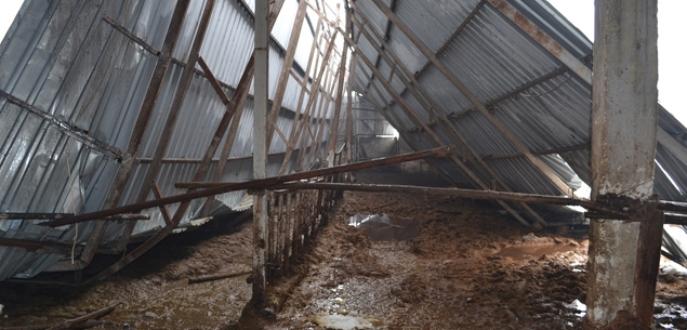 Bursa'da ahır çöktü, 8 sığır telef oldu
