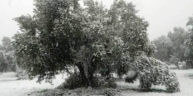 Kar, zeytini de vurdu