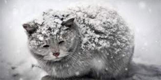 6 saat aç kalan kediler donuyor