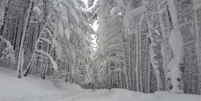 Uludağ'da karlı ormanlar büyülüyor
