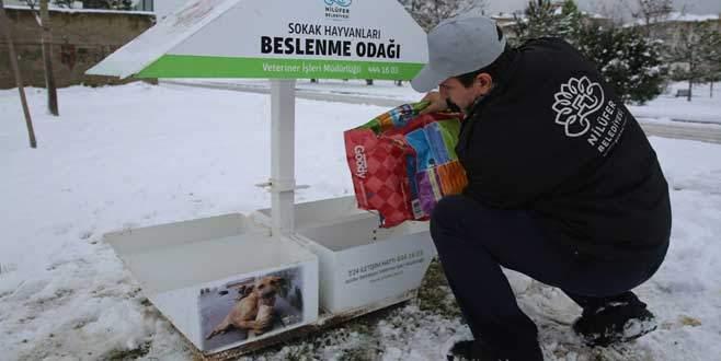 Nilüfer Belediyesi sokak hayvanlarını unutmadı
