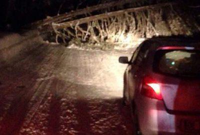 Uludağ Yolu'nda devrilen ağaçlar devrildi, yol trafiğe kapandı