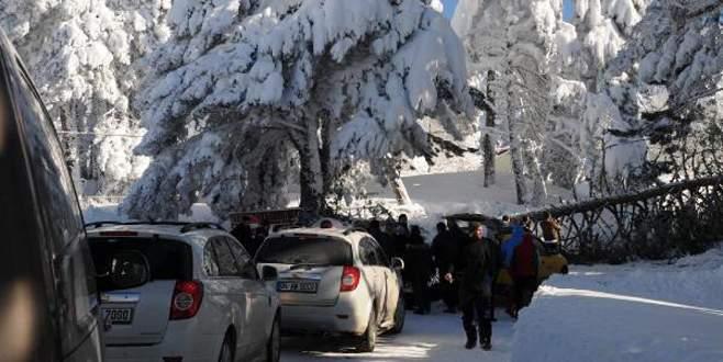 Uludağ'da karakış hasarı: 200'e yakın ağaç devrildi!