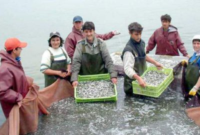 İznik Gölü'nde balık üretimi düştü