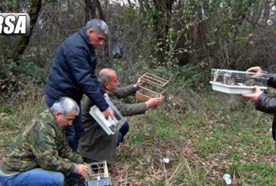 Kuş pazarında satılan 77 adet kuşa el konuldu