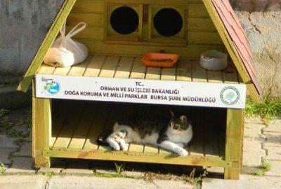 Kedilere villa tipi ev