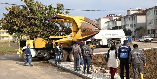 Nilüfer'den Bandırma'ya ağaç desteği