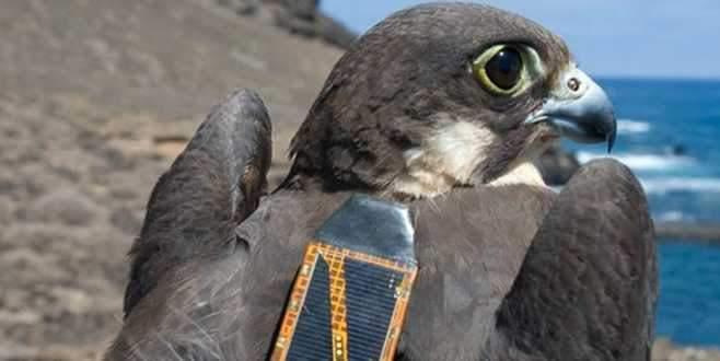 Ölü kuşun üzerinde bakın ne çıktı?