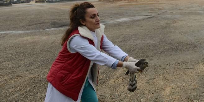 Yaralı atmaca Nilüfer'de hayat buldu