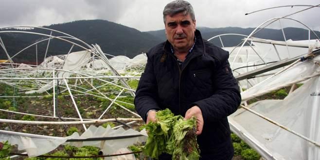 Lodos Bursalı çiftçileri yıktı geçti