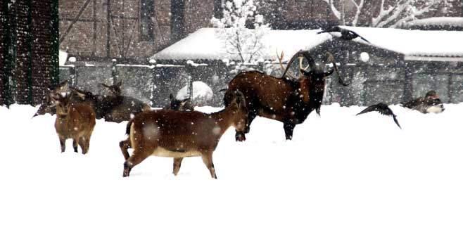 Hayvanat bahçesi sakinlerinin kar keyfi