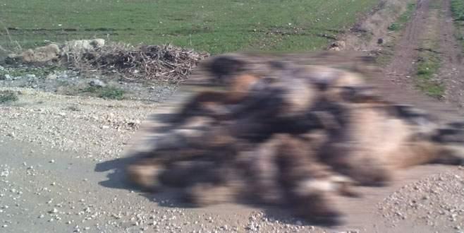 Yenişehir'de köpek katliamı!