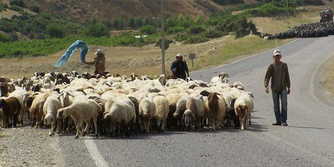 Çobanlara sertifika