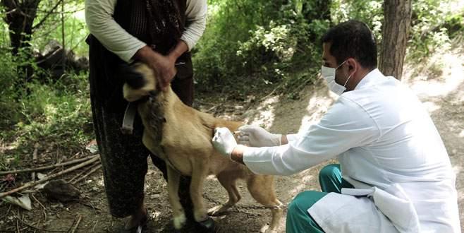 Karacabey'de kuduz aşılama kampanyası