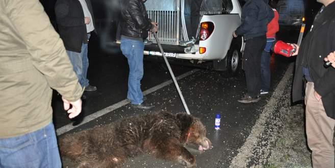 Aç kalıp otoyola inen ayıya TIR çarptı!