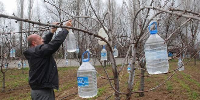 Meyve ağaçlarına su şişesi asıyor!