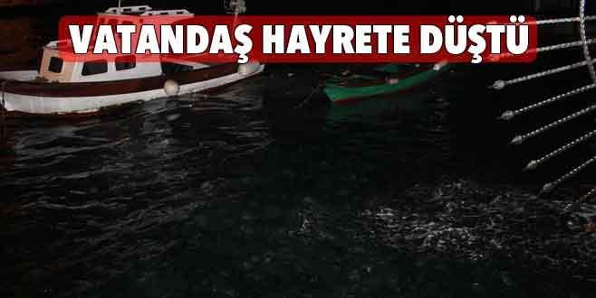 Denizanaları Boğaz'ı istila etti