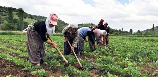 İnegöl tarımı ihracata koşuyor