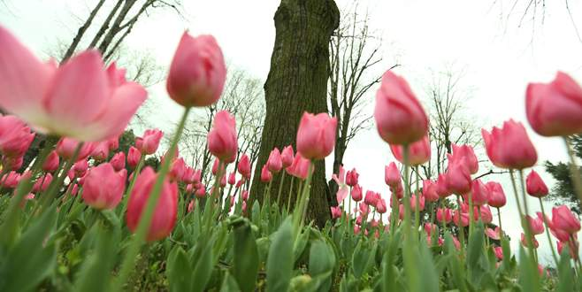 Yeşil Bursa çiçeklerle renklendi