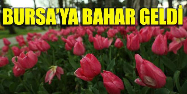 Bursa'ya bahar geldi