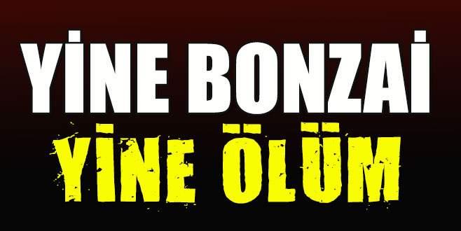Bonzai, Bursa'da can aldı!