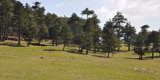 'Tarım, hayvancılık ve turizmin gözde merkezi olacak'