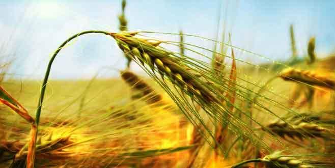 'Tarıma destek milli gelirin yüzde 1'ine çıkarılmalı'